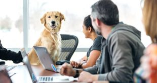 Viele Unternehmen haben den positiven Effekt des Bürohundes auf das Arbeitsklima bereits erkannt (Foto: Drew Hays/unsplash.com)