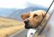 Urlaube und Abenteuer stärken das Verhältnis zwischen Hund und Halter (Foto: Emerson Peters/Unsplash)