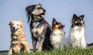Hunde sollten in einer Tierpension Zugang zu einem Auslauf haben
