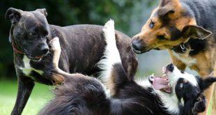 Die Körpersprache ist die wichtigste Form, über die Hunde uns ihr Befinden mitteilen