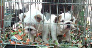 Starke Allianz gegen den grausamen Online-Tierhandel