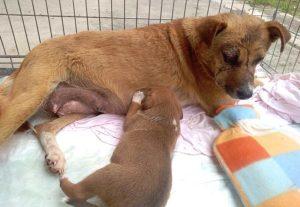 Corbita und Welpe Ben sind wiedervereint und auf dem Weg der Besserung (Foto: © PETA Deutschland e.V.)