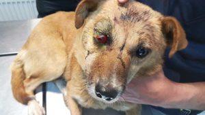 Corbitas Zustand, als sie von der Tierklinik aufgenommen wurde (Foto: © PETA Deutschland e.V.)