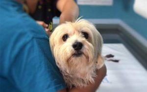 """Flyer """"Schnelle Hilfe für Hund, Katze & Co."""" informiert Tierbesitzer über den tierärztlichen Notdienst"""