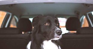 Im Auto sind Rücksitze und Beifahrersitze für ungesicherte Hunde während der Fahrt tabu (Foto: Tadeusz Lakota / Unsplash)