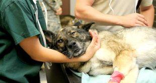 Ein Unfall oder eine langwierige Erkrankung können Tierhalter bei der tierärztliche Versorgung vor eine große finanzielle Herausforderung stellen.