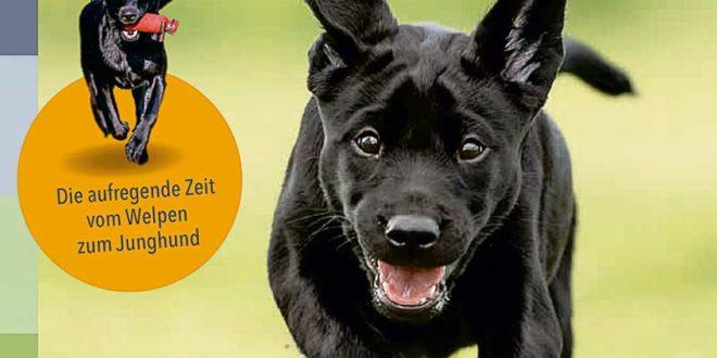 Die aufregende Zeit vom Welpen zum Junghund