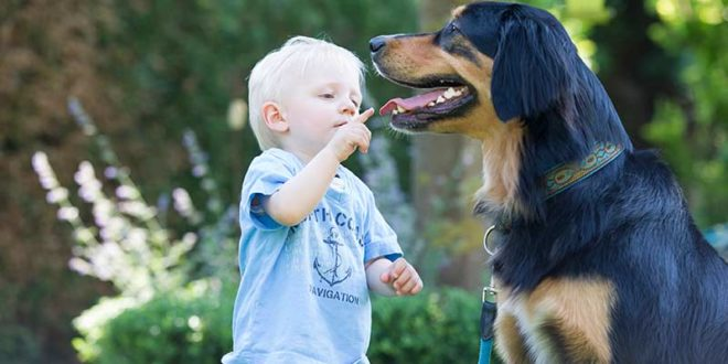 Die richtige Zahnpflege bei Hunden ist wichtig (Foto: © TASSO e.V.)