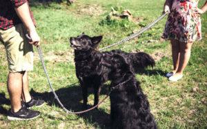 Urteil bei Trennung - wer bekommt die Hunde