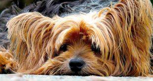 Wer bei großer Hitze seinen Hund in einem Fahrzeug zurücklässt, kann keinen Ersatz für Schäden verlangen, die dadurch entstanden sind, dass Rettungskräfte gewaltsam das Fahrzeug geöffnet haben.