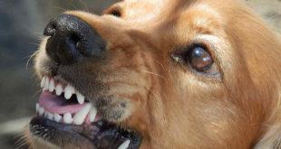 Schmerzensgeld nach Hundebiss mit schweren Folgen