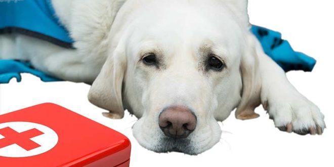 Hand aufs Herz: Wissen Sie, was in einem tierischen Notfall zu tun ist?