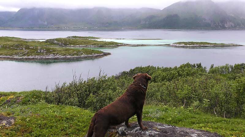 Tödliche Hundekrankheit in Norwegen: Man sollte zurzeit von einer Reise mit Hund in die betroffenen Länder absehen.