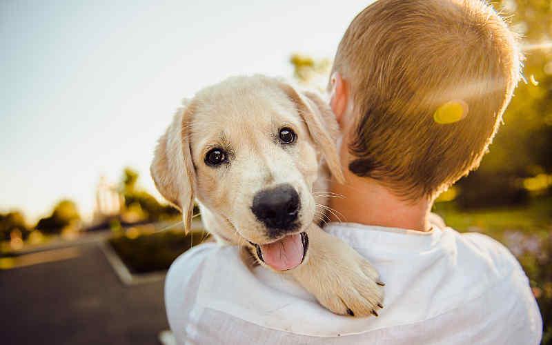 Tierheim: Welches Tier passt zu mir?