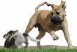 Bissverletzung durch unangeleinten Hund