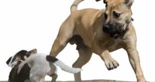Schmerzensgeld: Bissverletzung durch unangeleinten Hund