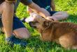 Hunde geben Kindern ein Gefühl von Sicherheit