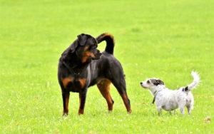 Urteil: Grenzen bei der Haftung von Hundehaltern