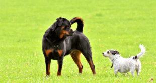 Grenzen bei der Haftung von Hundehaltern