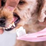 Zahngesundheit beim Hund