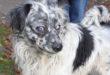 Hamburger Tierschutzverein bittet um Hinweise