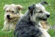 Coronavirus - Haustiere nicht vergessen