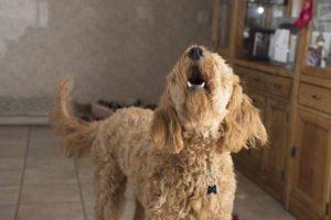 Hundegebell täglich maximal 60 Minuten