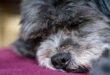 Coronavirus jetzt auch bei Hund oder Katze