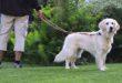 Corona-Pandemie: Tipps – was Tierhalter wissen müssen