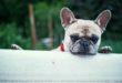 COVID-19: Was passiert mit dem Haustier
