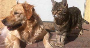 Katze bleibt das Lieblingsheimtier der Deutschen