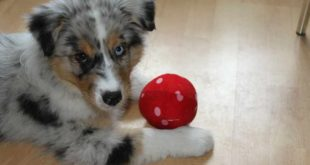 COVID-19: Zeit mit dem Hund zu Hause genießen